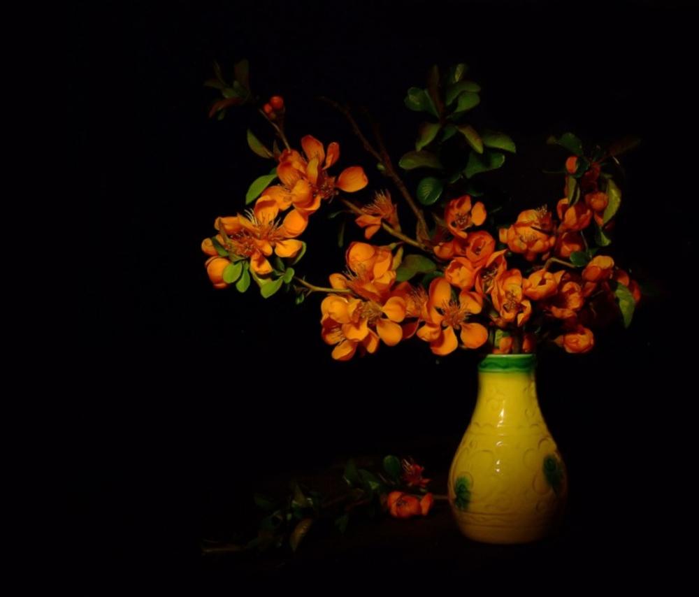 фотонатюрморты на темном фоне картинки иногда слетает масштаб