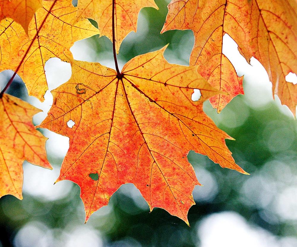 керамогранит картинки про листья мечтала