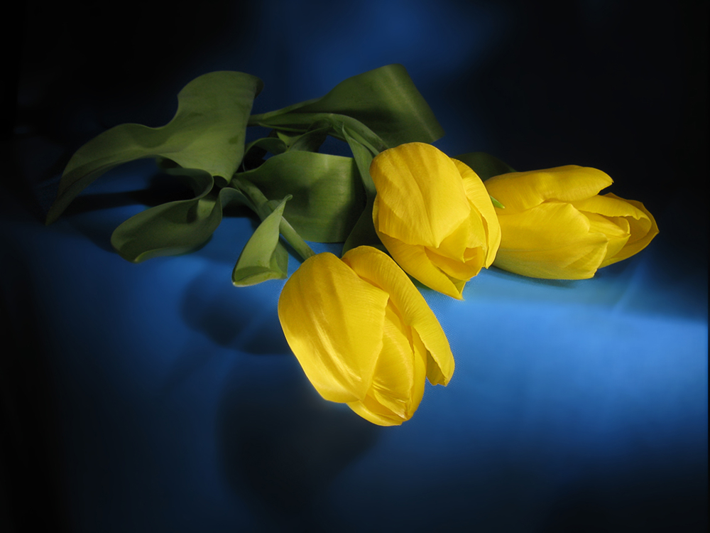 картинки желтые цветы на синем фоне рисованию
