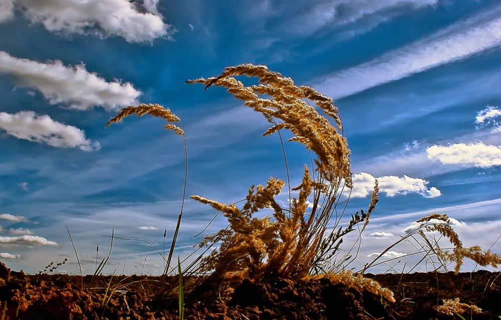 Вейся ветер картинки
