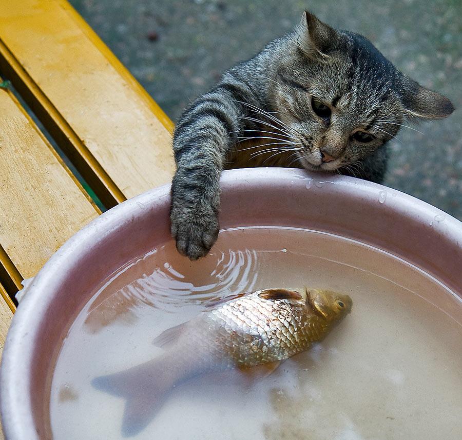 картинки люблю рыбку кушать
