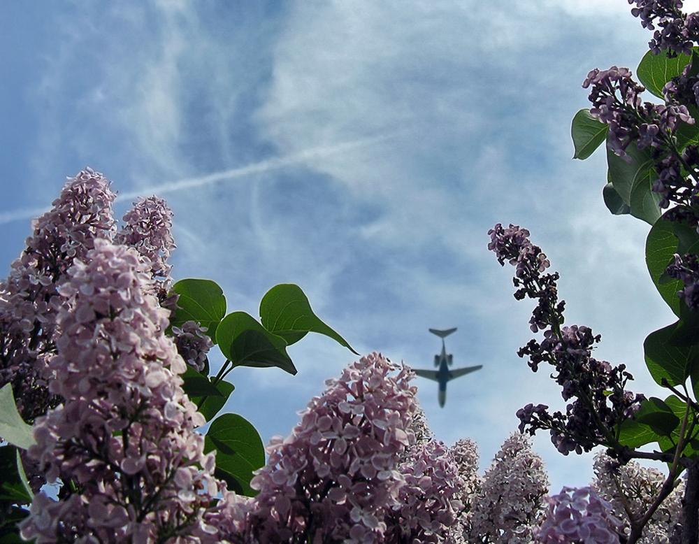 хищного необычные фото сирени на фоне неба где небо