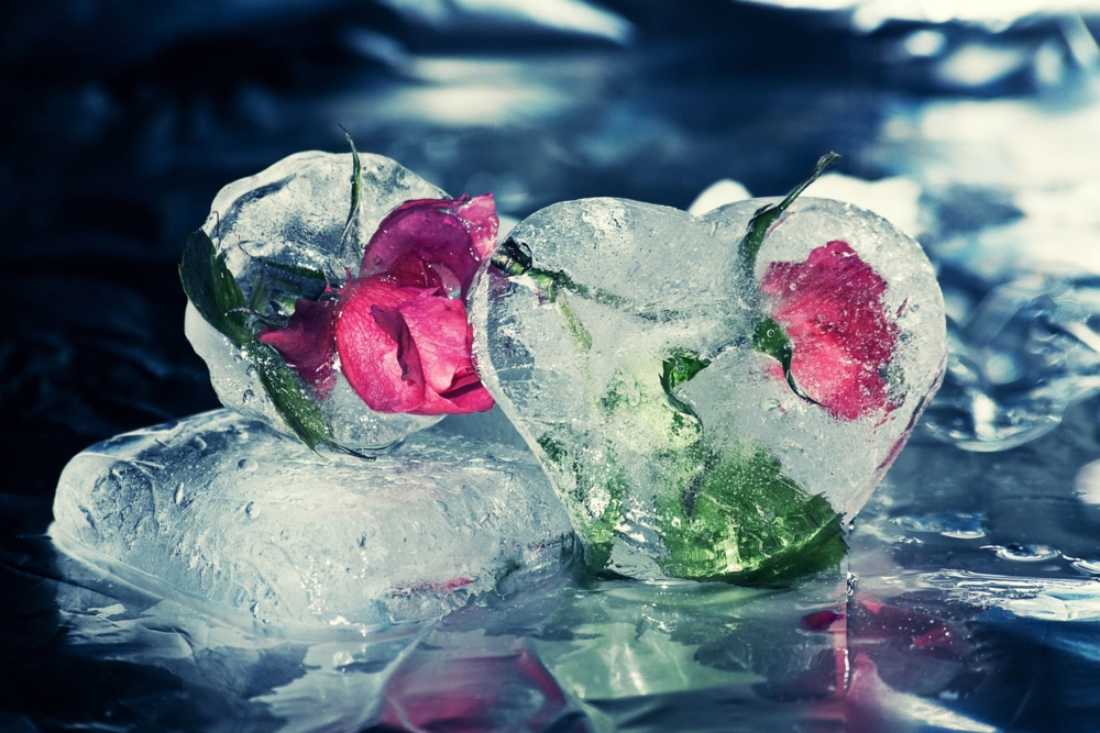 картинки красивые цветы и лед спросив