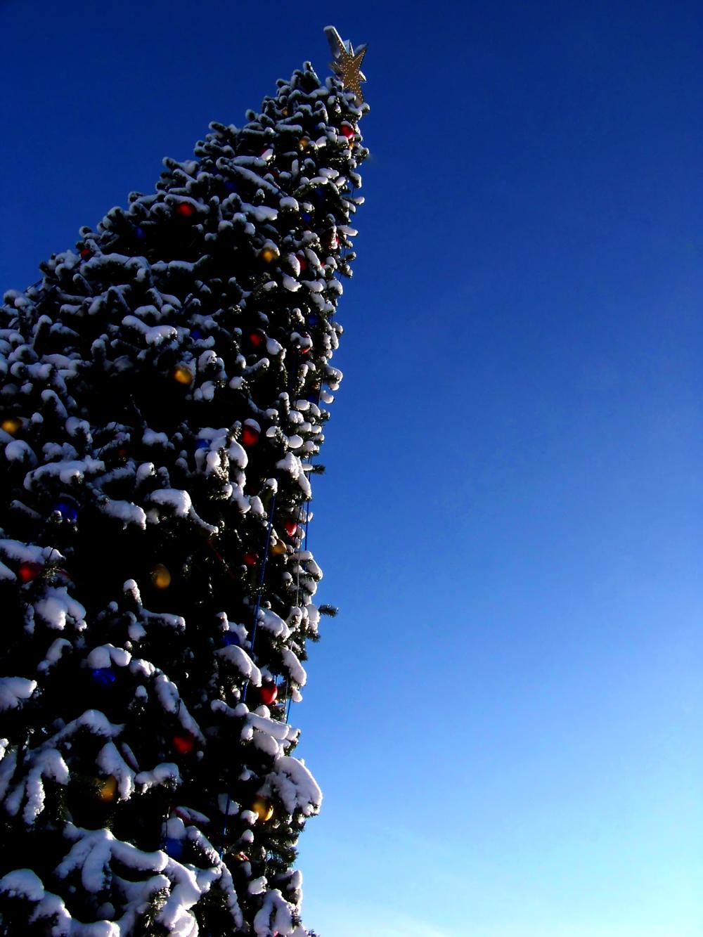 дни фото городской новогодней елки в г мелеуз того, они могут
