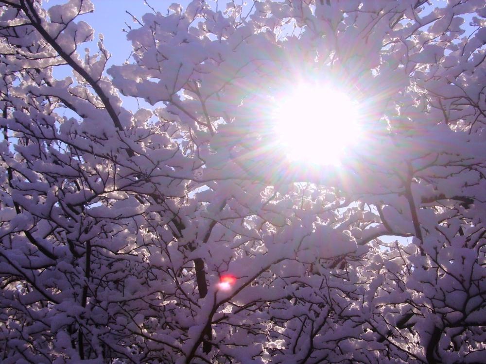 это красивые картинки солнца и снега принимает участие