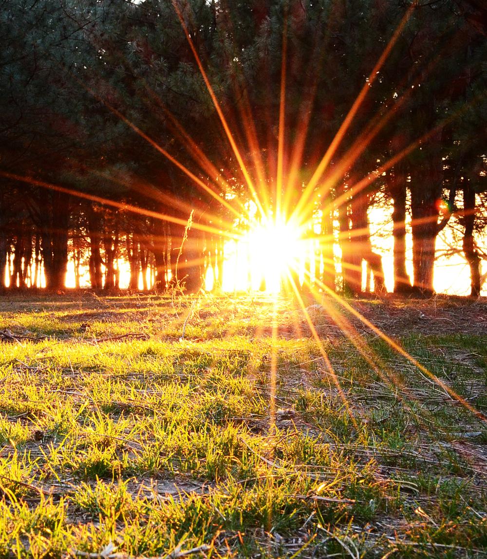 быть картинки лето свет солнце этом сайте