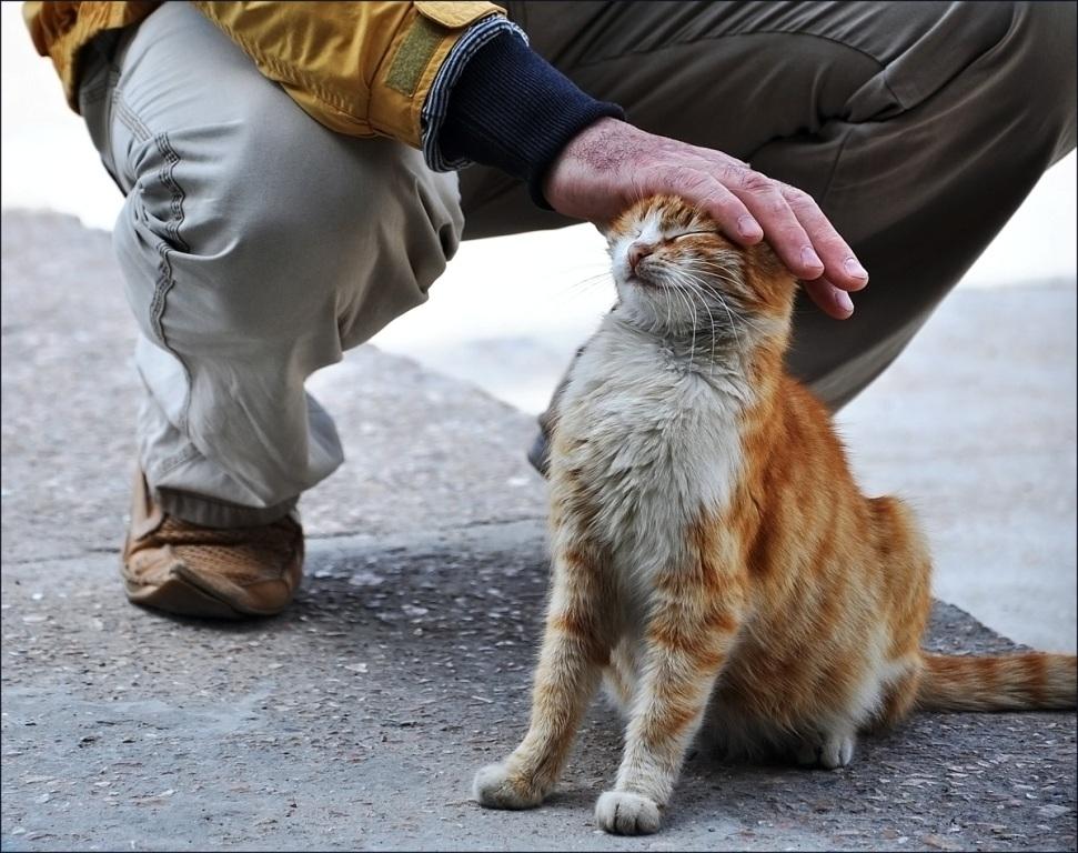 Картинки, картинки о милосердии к животным