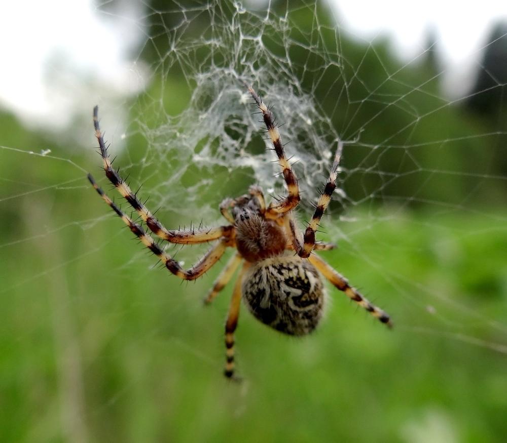 пауки урала в картинках способом