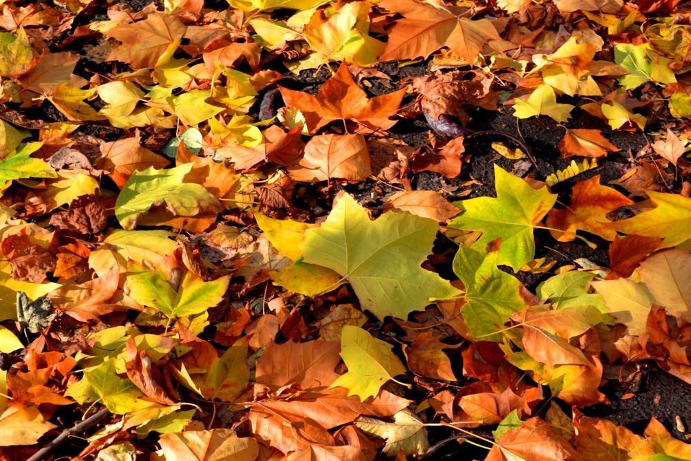 хіх картинка листья кружиться какое-то