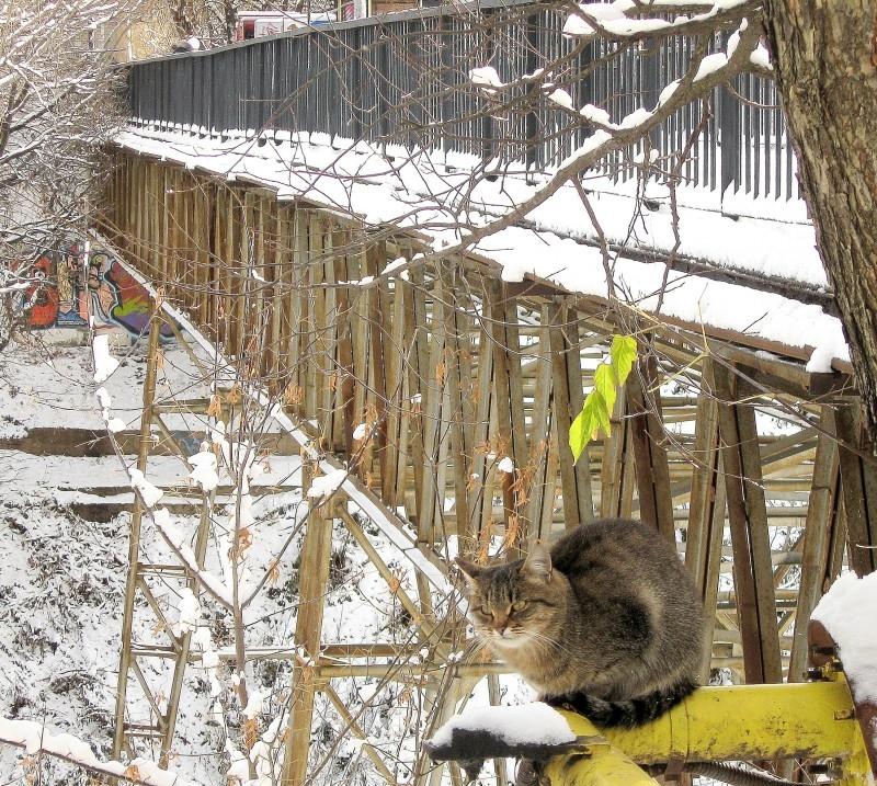 Мостик, кошка и последние листья
