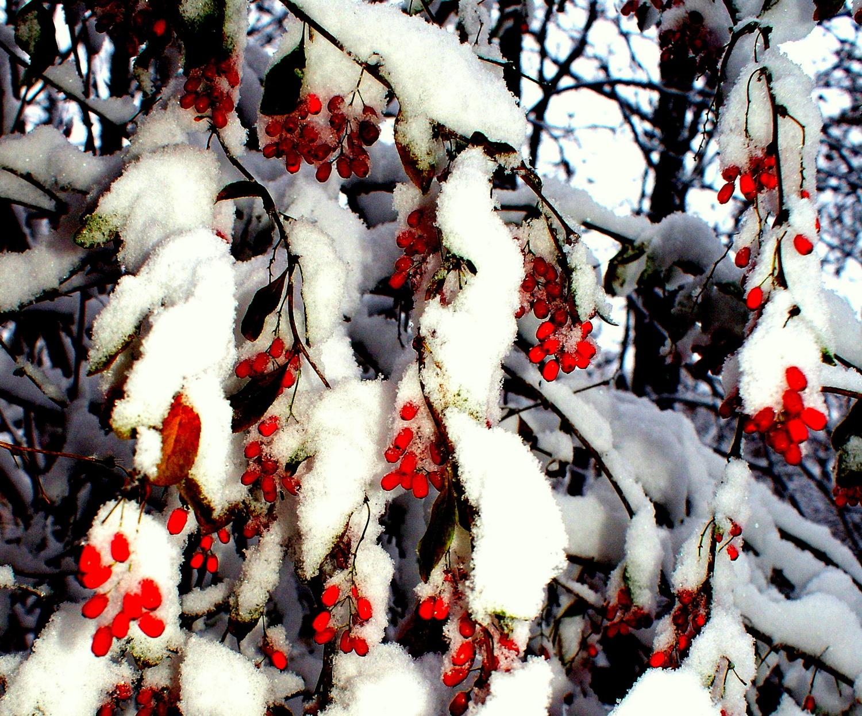 Под первым снегом