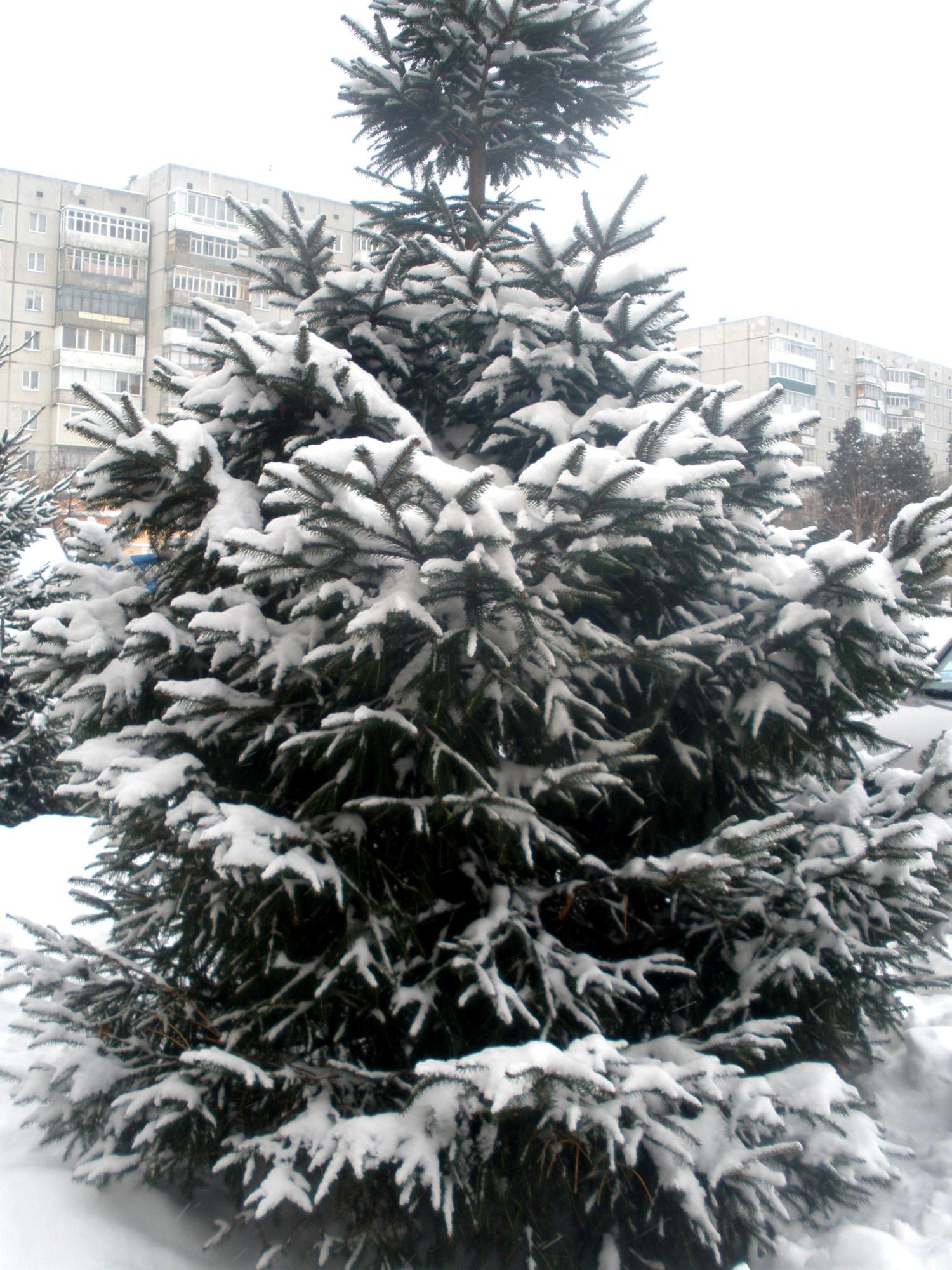 снежком укутывал)