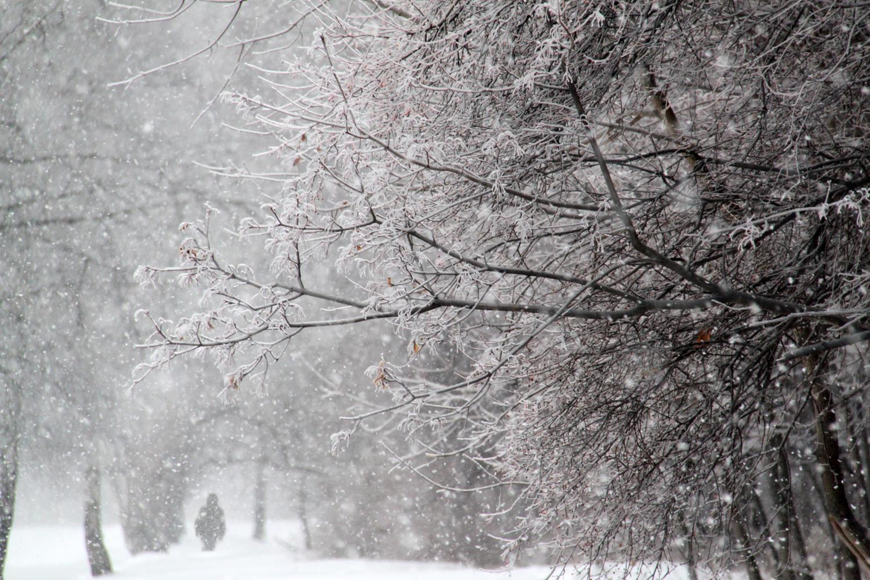 Снег метет картинки
