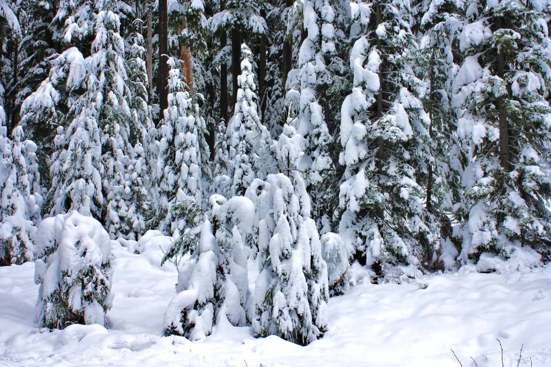 богатый домовладелец зима снежная целина фото большой интернет