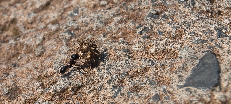 дотянуть до муравейника
