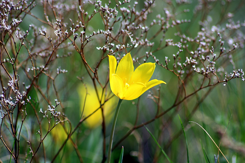 солнечный цветок весны