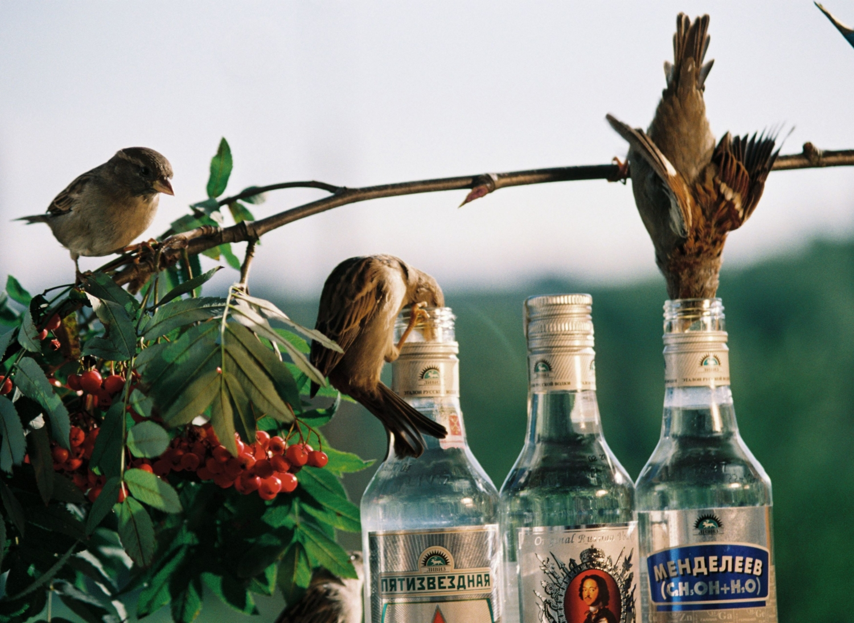 Не лезь в бутылку