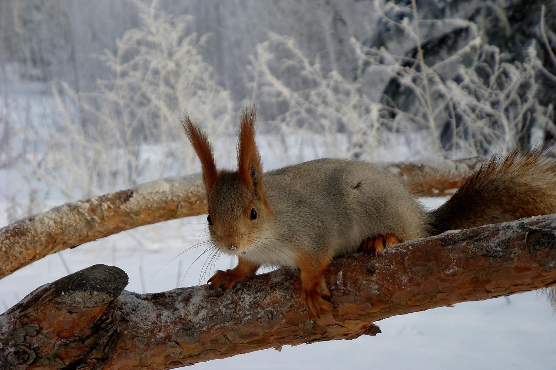 важны заморочки, фото птиц и животных зимой как приятны