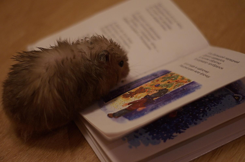 Новогодняя сказка для хомяков