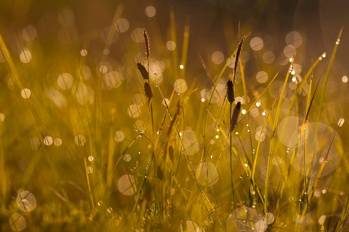 Утренние светлячки