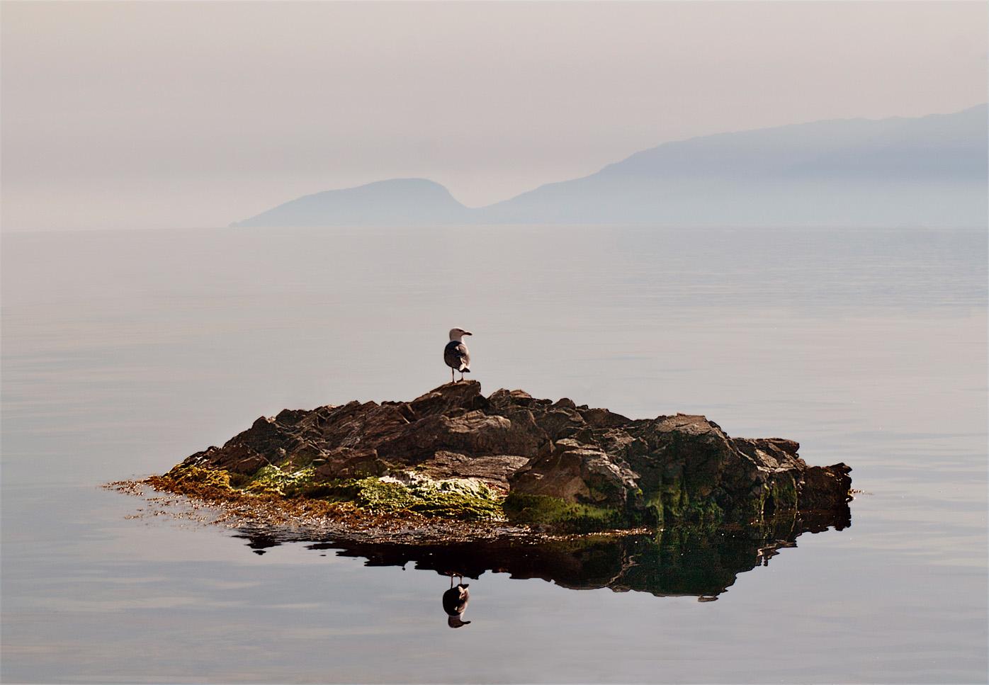 Хозяйка острова