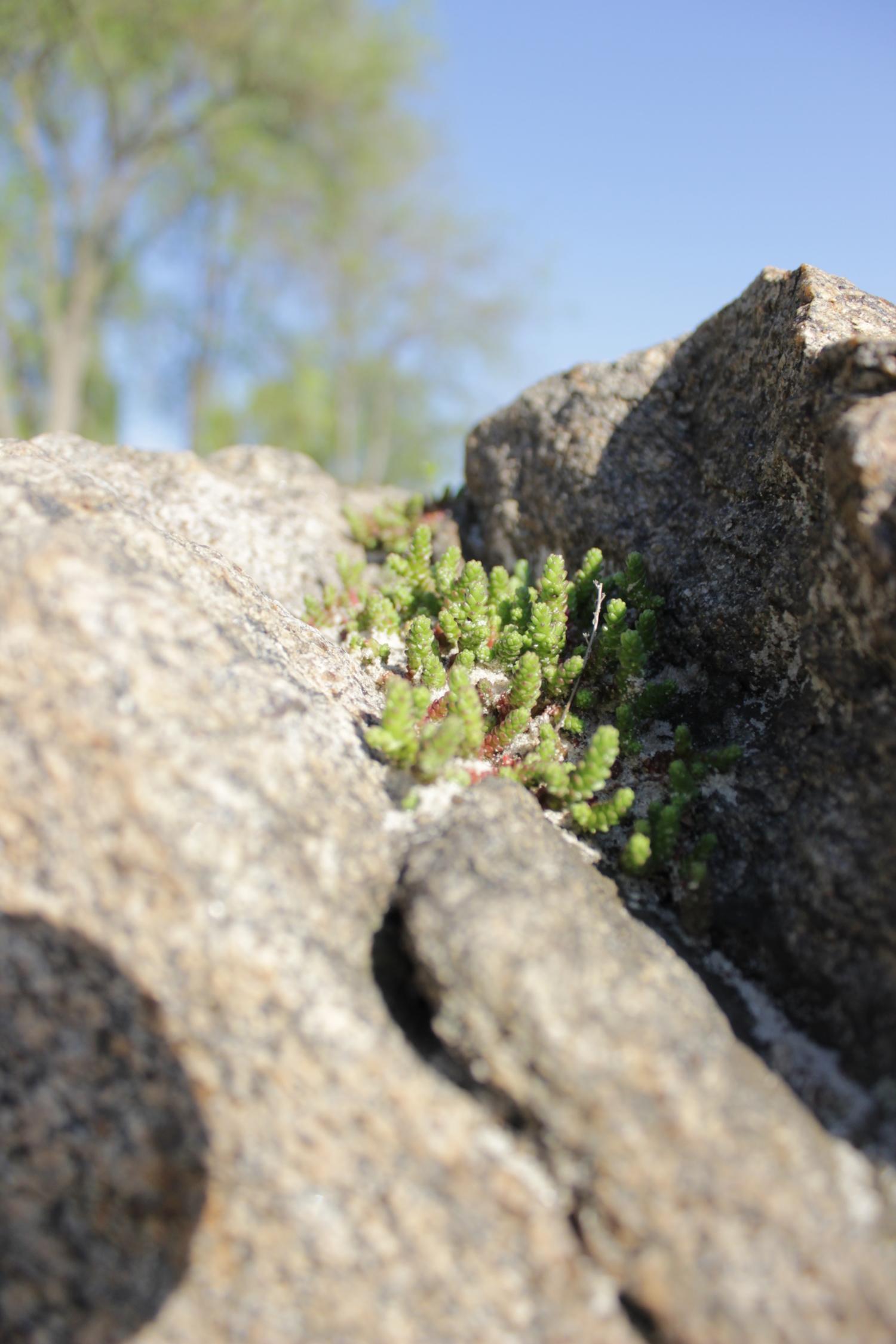 Жизнь среди камней.