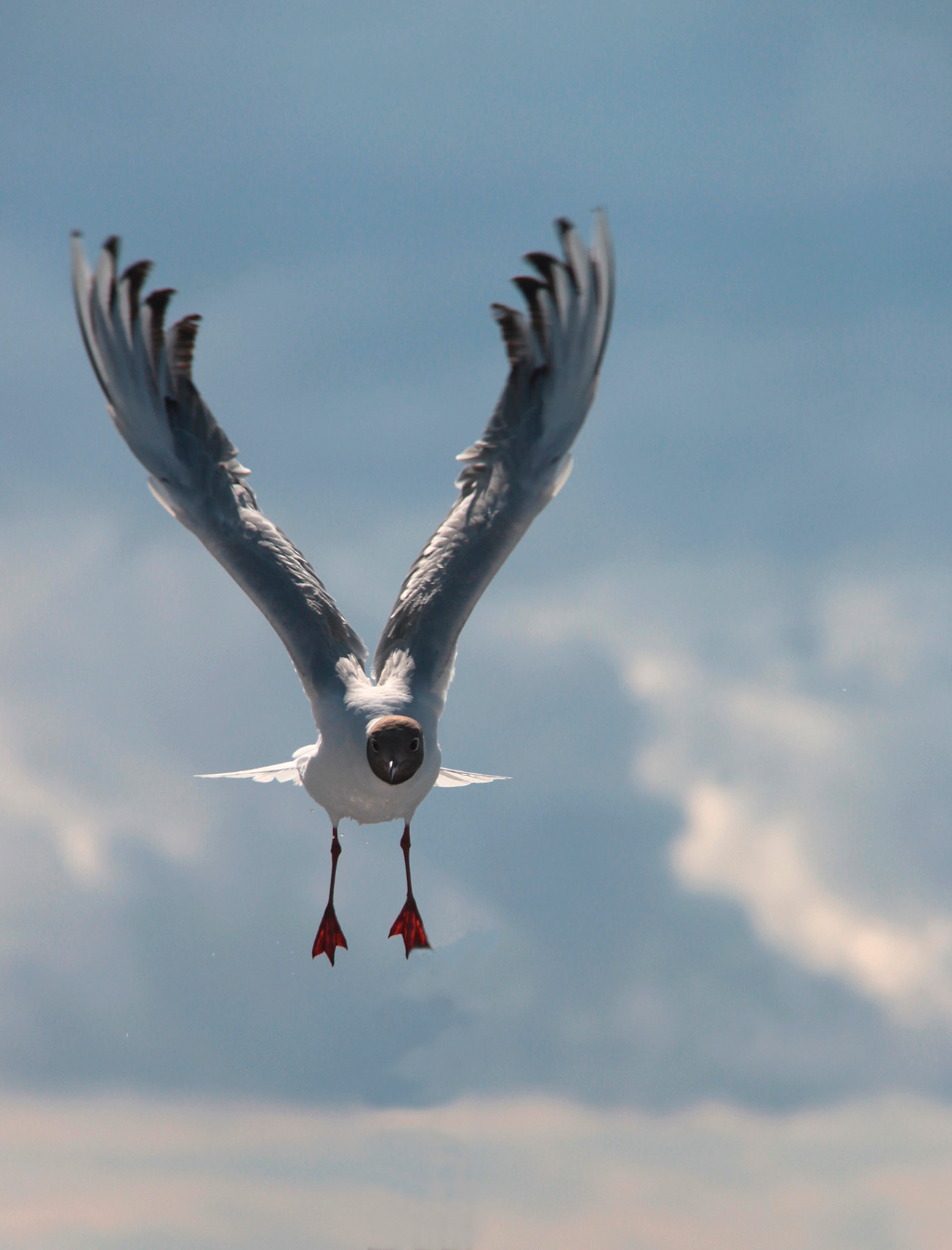 крылья кверху-лапы шире