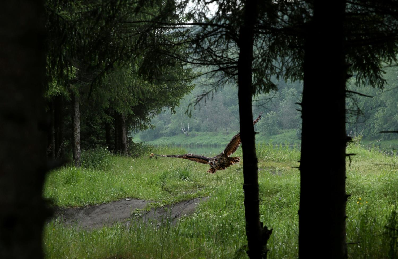 """Лечу с небес в дремучий лес..."""