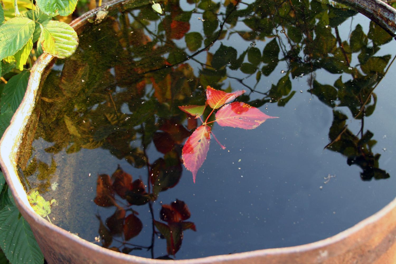 Осень на даче.