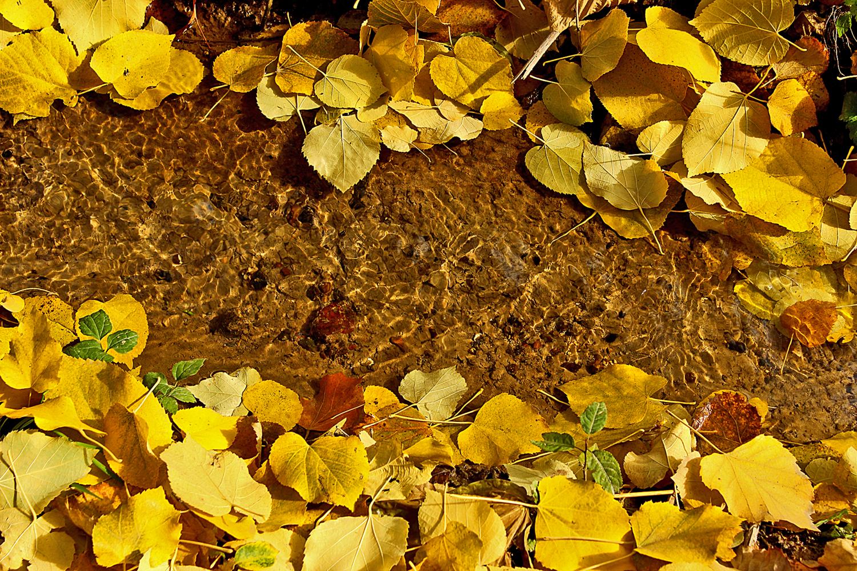 Средь золотой листвы...