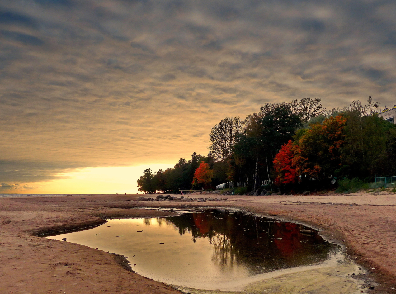 Репинская осень