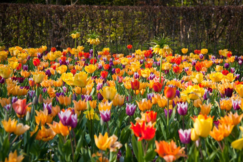 В царстве цветов