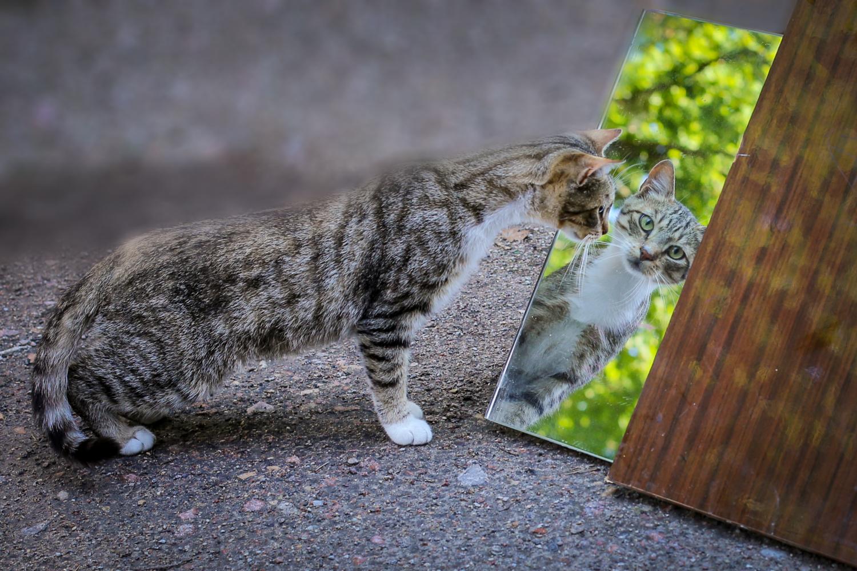 Гляжу в тебя как в зеркало