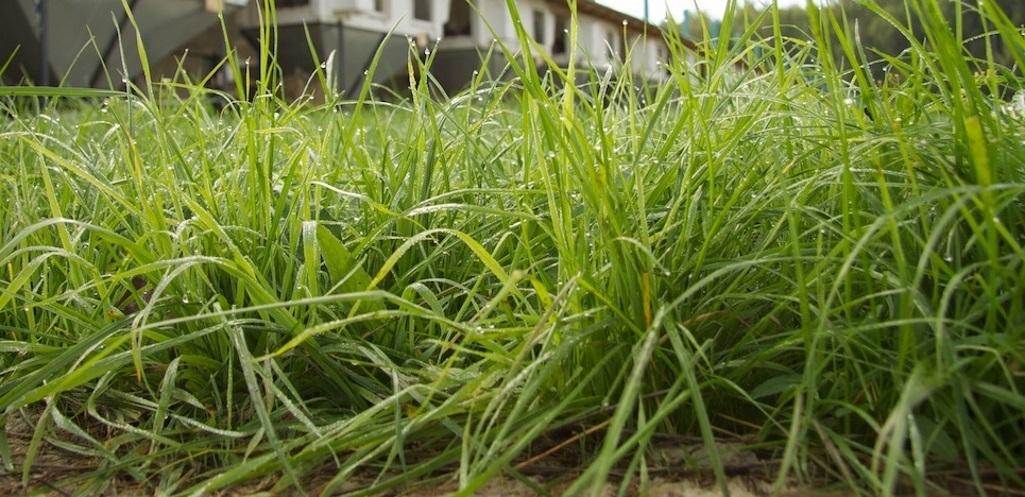 Трава-Мурава.....