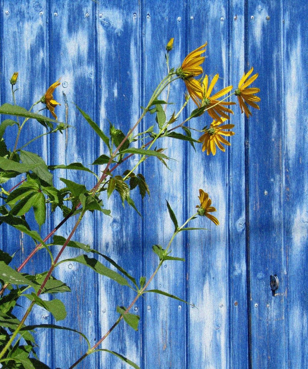 Про цвет и цветы