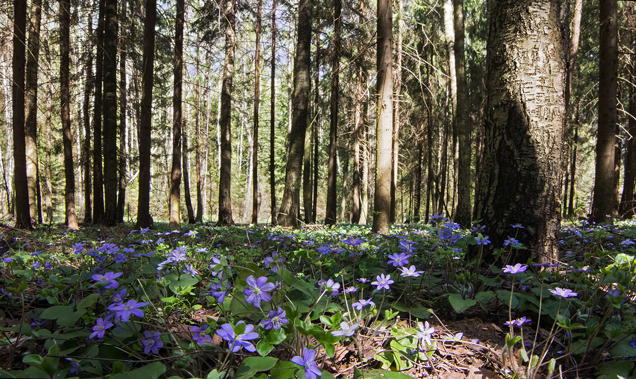 Утро в весеннем лесу