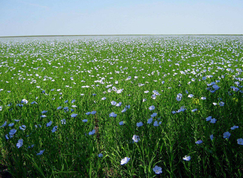 То ли поле, то ли море...