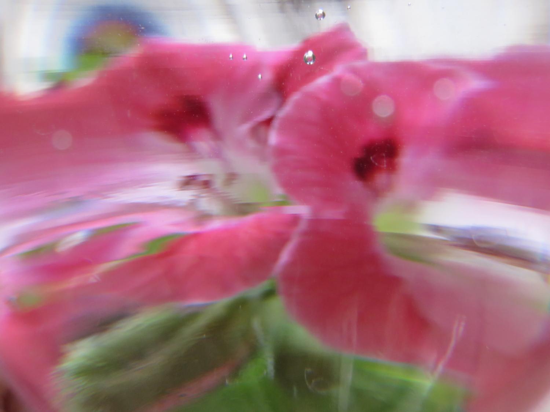 Тонущий цветок.
