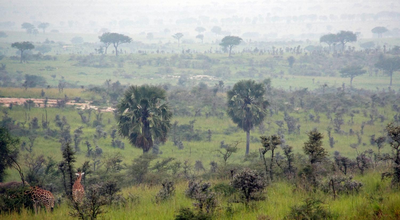 Доброе утро, Африка!!!