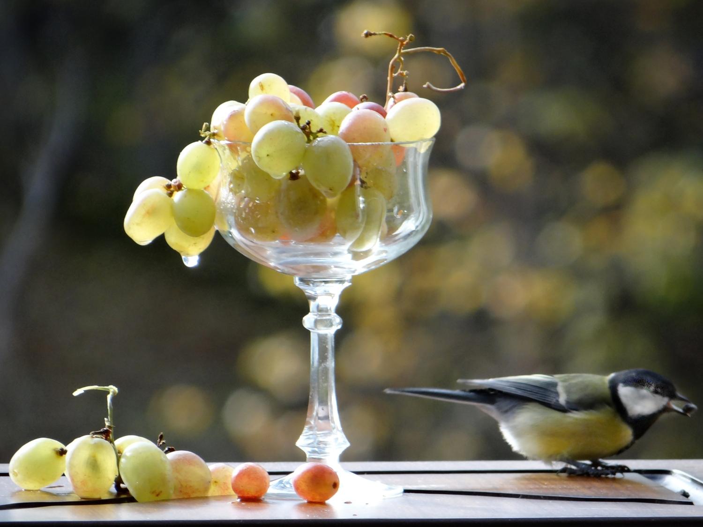 Синица и виноград