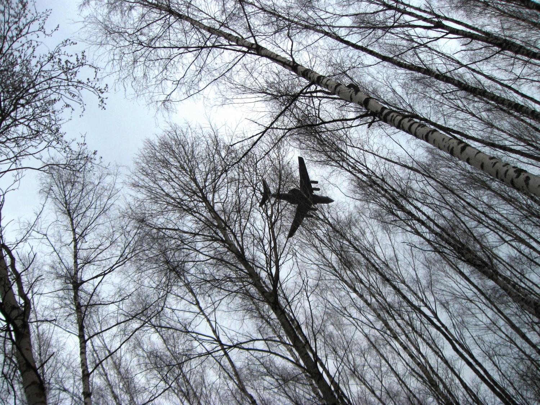 Небо. Самолет. Деревья.