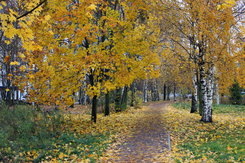 Осеннее золото