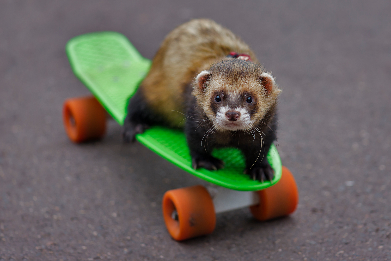 Начинающий скейтбордист