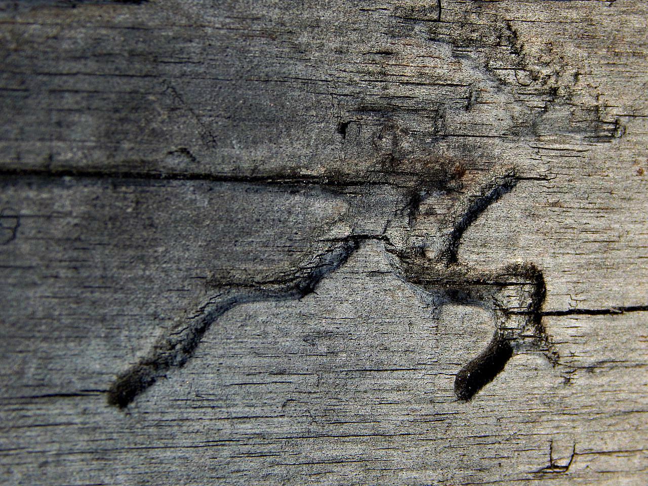 ДЕВЯТЬ раз СИЛЬНЫЙ короед вгрызался в дерево...