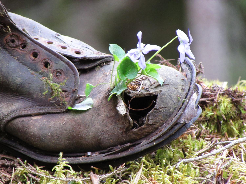 Чей туфля?