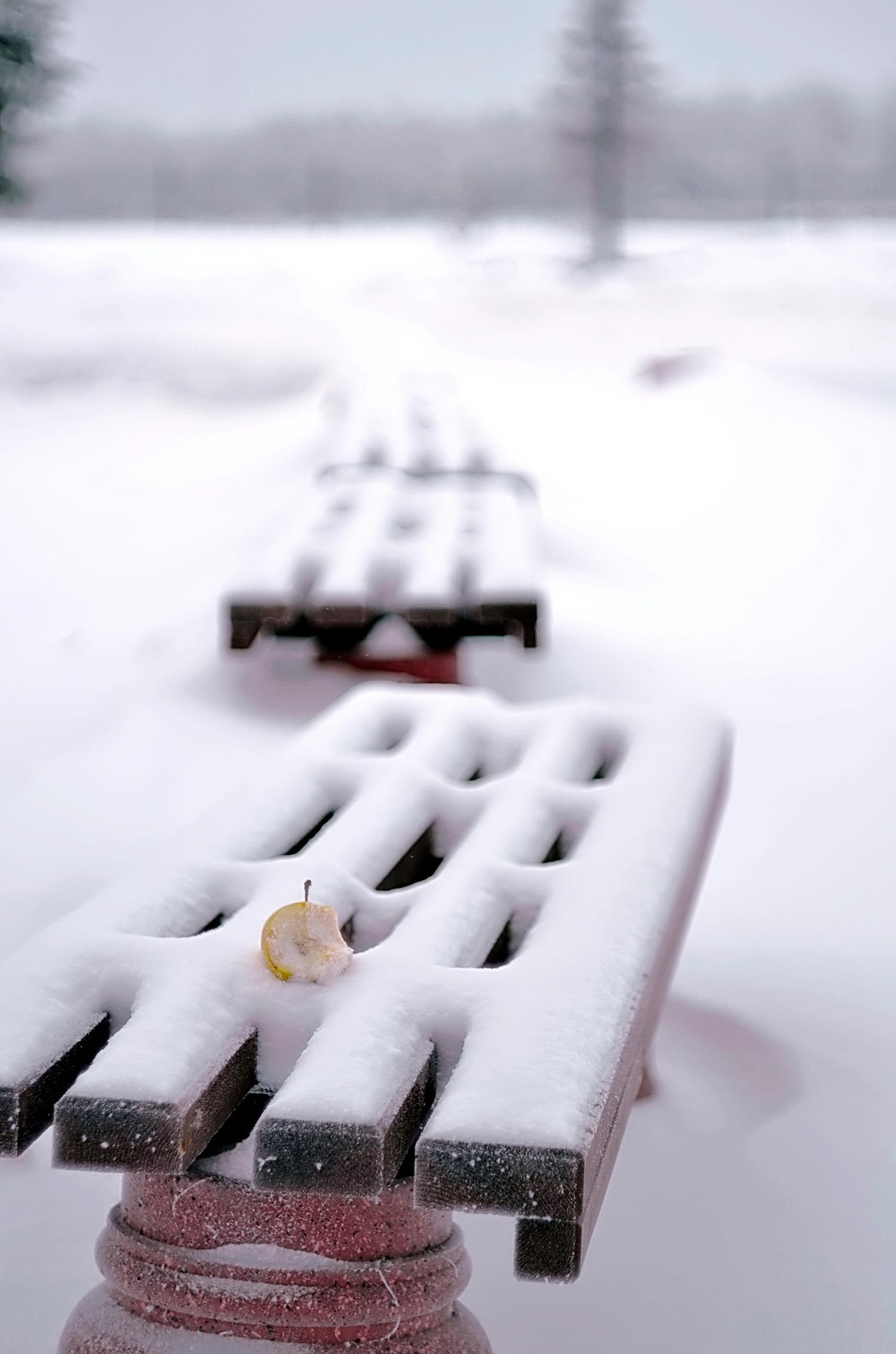 занесённые снегом