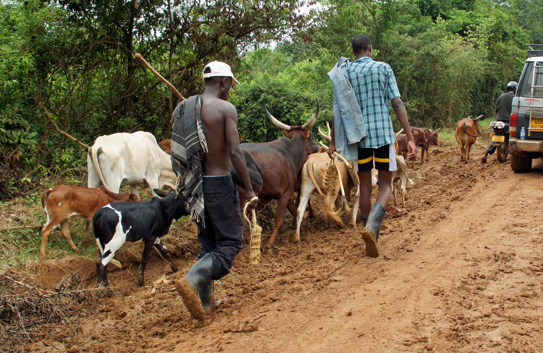 По дорогам Африки