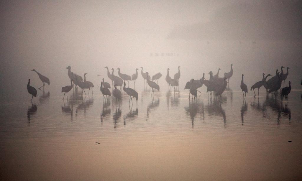 Рассвет на озере Хула