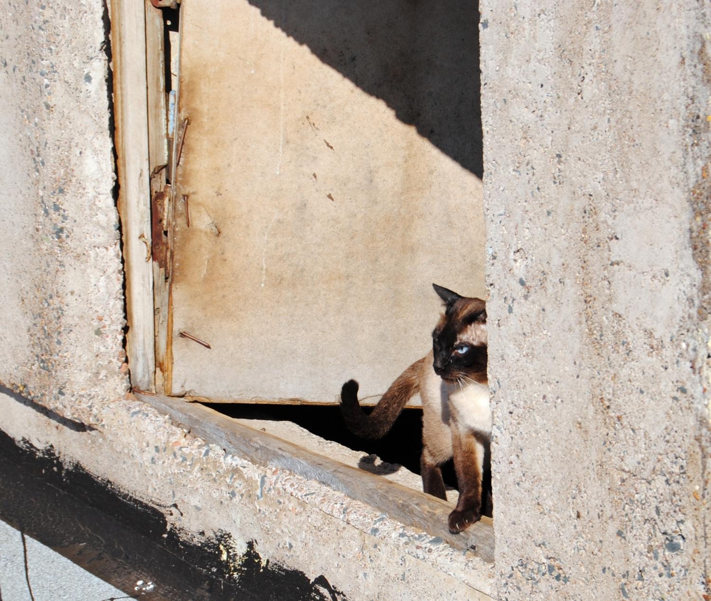 Дверь на волю.. очень скрипучая..