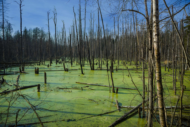 Весна на болоте